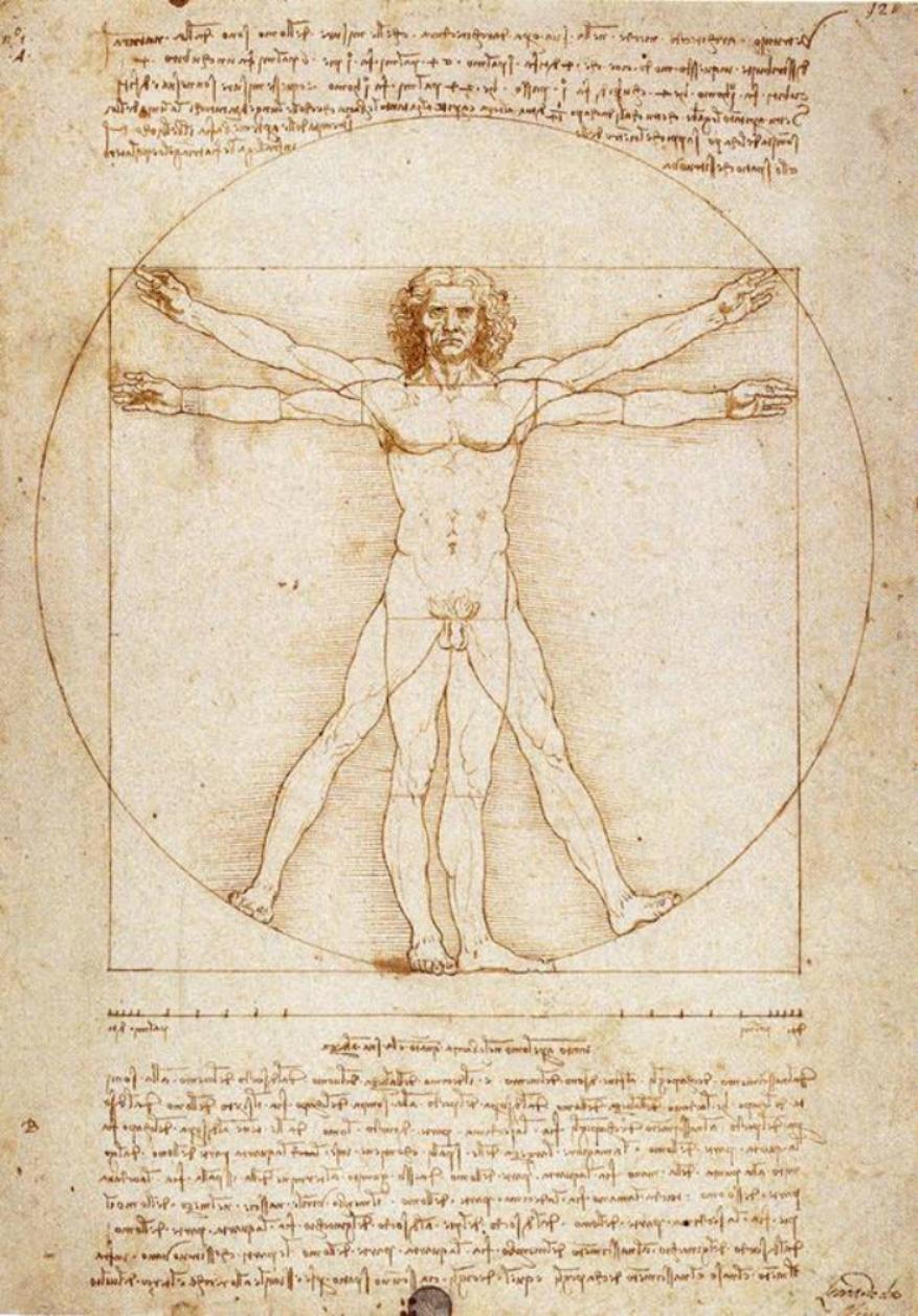Modèle de l'homme, selon l'occident (Vinci).